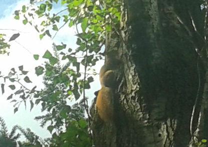 Ott egy mókus! - jozsefattilalakotelep.hu